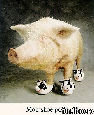 porc1.jpg